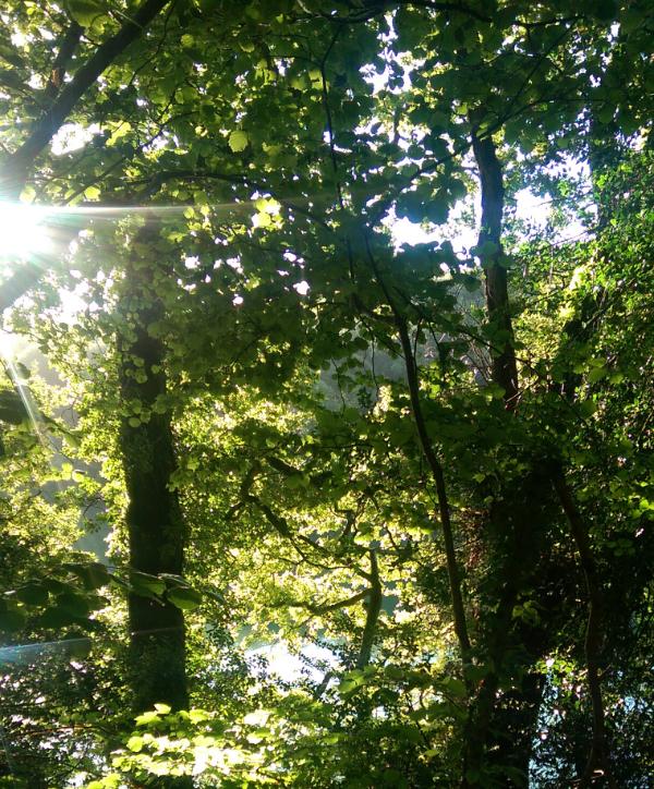 Native Woodland Plants: Restoring Native Woodland Brings Multiple